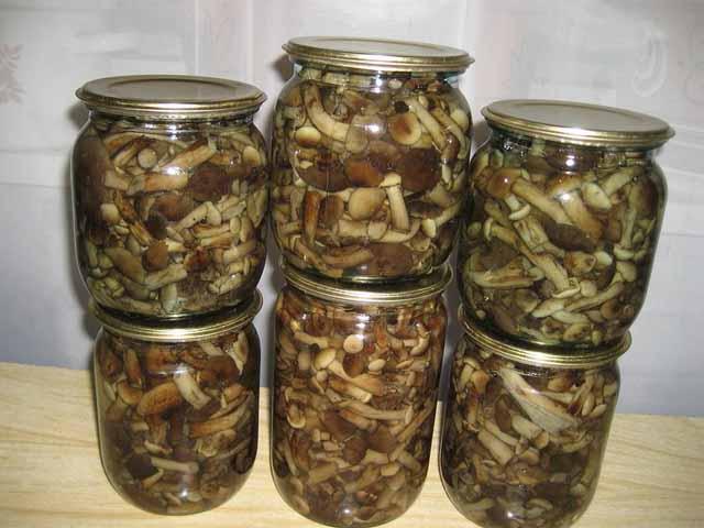 Маринованные дуньки рецепт с пошагово