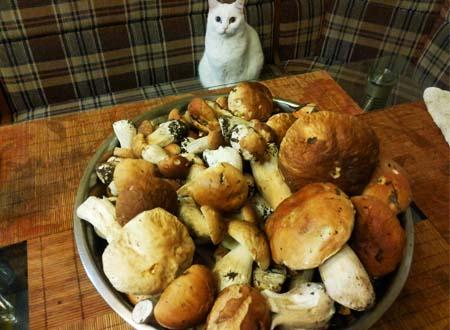 Грибной суп из замороженных грибов, рецепт