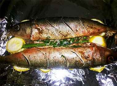 forel