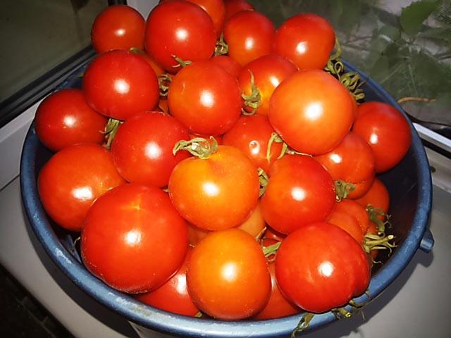 pomidory-v-zhelatine-na-zimu18