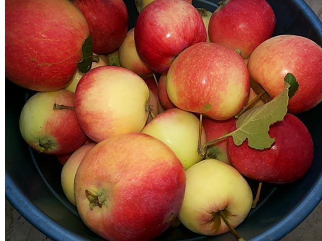 Рецепты пирога с яблоками в духовке