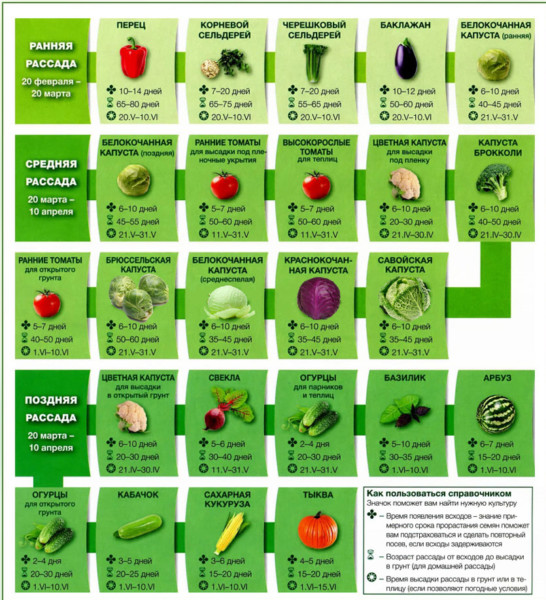 """Что сажать на рассаду в марте 2019 года. Календарь посадки цветов и овощей"""""""