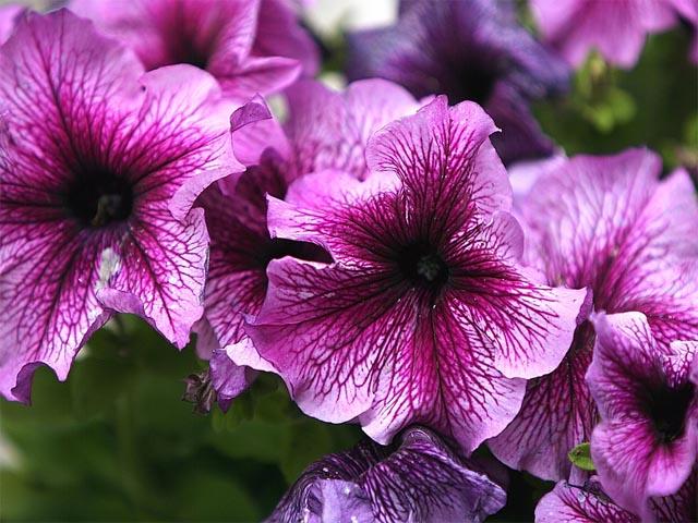 Как фоткать цветы