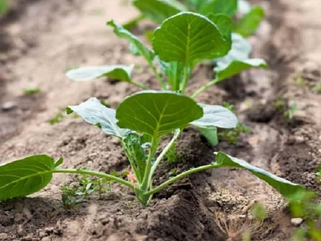 Что сажать в апреле — календарь посадки овощей и цветов