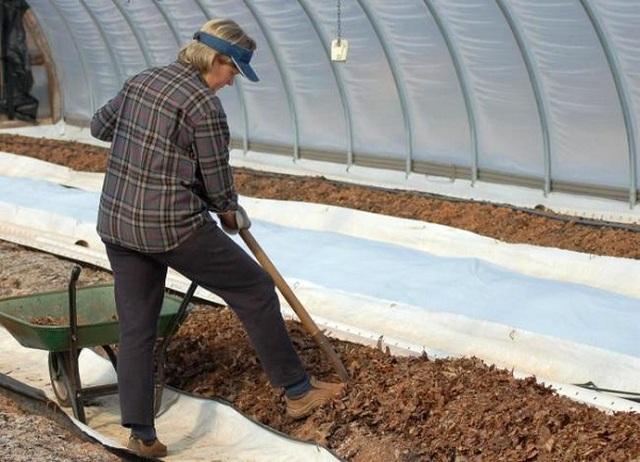 Что посадить в теплице после уборки томатов