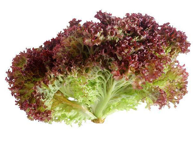 salat_lollo-rossa