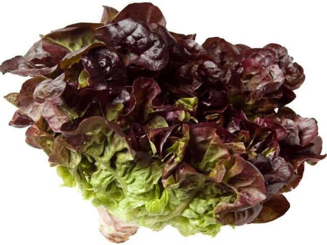 salat_oaklif