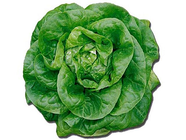 salat_batterhead