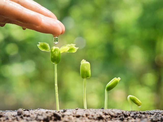Лунный посевной календарь для садоводов и огородников на 2019 год: Когда сажать растения, время для посева