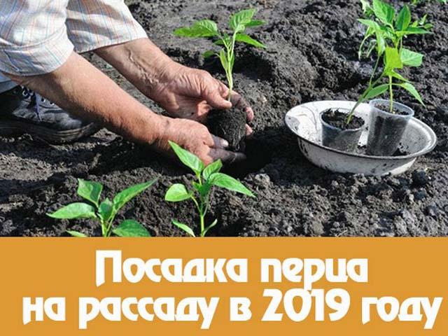 Когда сажать перец на рассаду в 2019 году