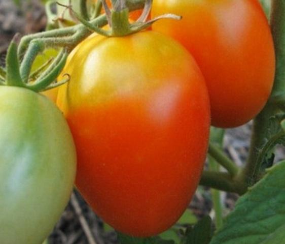 Лучшие сорта: томаты для Урала в теплице и открытом грунте, самые урожайные