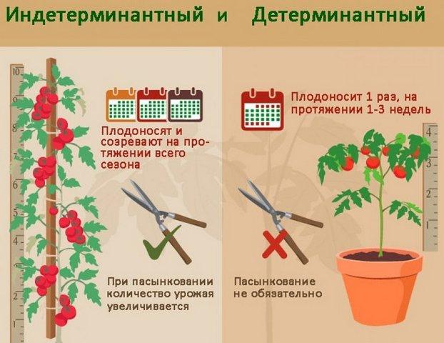 16-tomat.jpg