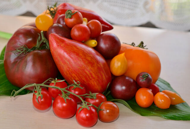 Ранние сорта помидор для теплицы самоопыляемые